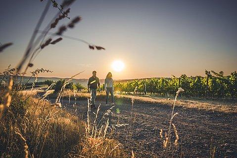 Spaziergang durch die Weinreben bei Bad Sobernheim, Nahe