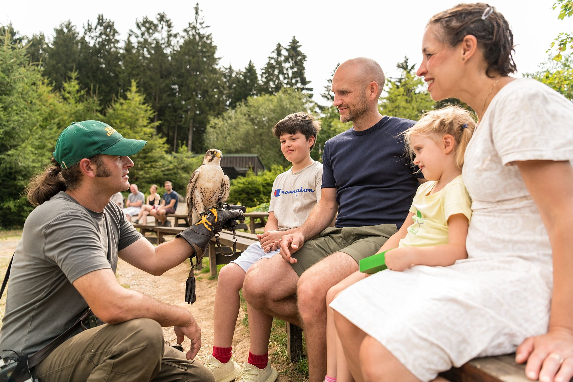 Falknerei im Wild- und Erlebnispark Daun, Eifel