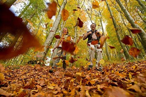 Wandern durch Waldlaub im Herbst beim Nerother Kopf, Eifel
