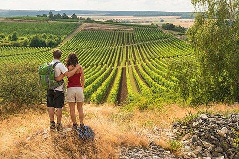 Weinlandschaft bei Siefersheim auf der Hiwweltour Heideblick, Rheinhessen