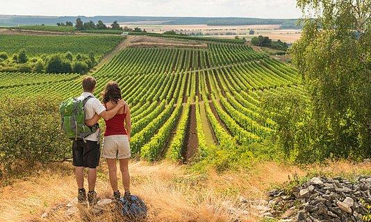 Paysage viticole près de Sieferheim, Hesse rhénane