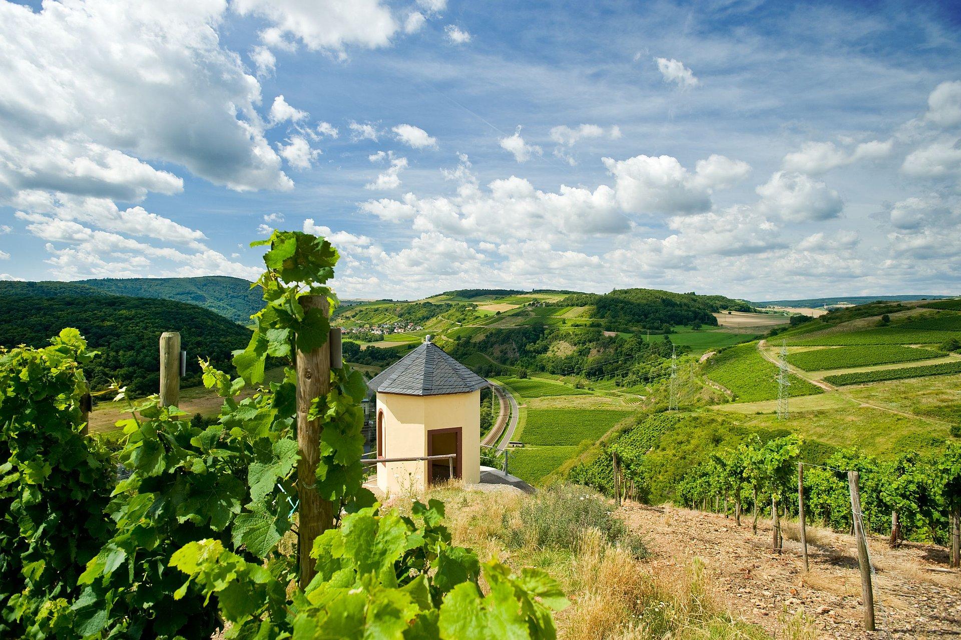 Blick auf die Weinlandschaft am Nahe-Radweg bei Norheim, Nahe
