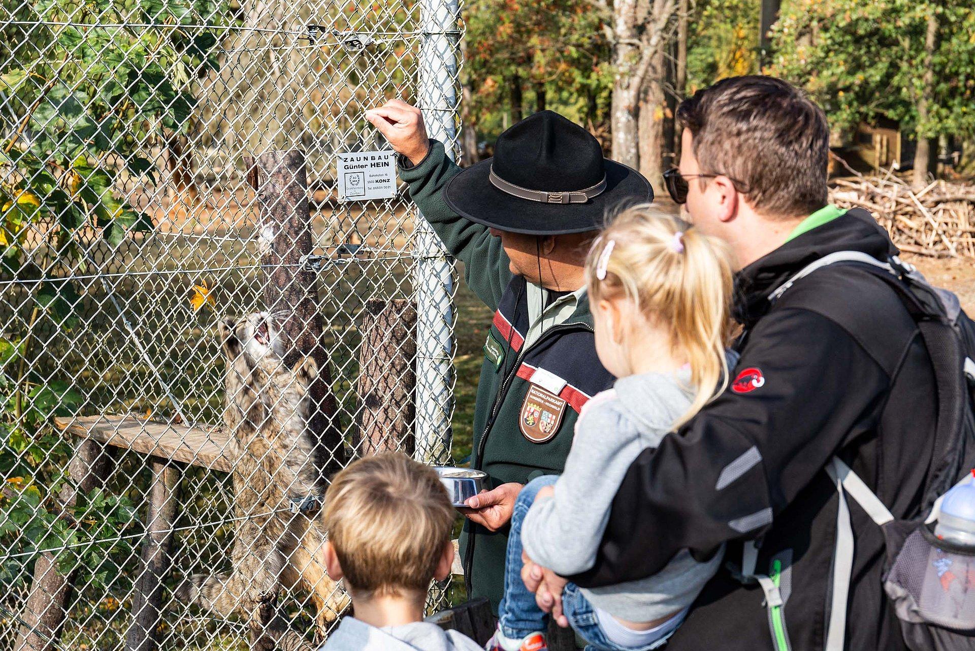 Wildkatzenfütterung im Nationalpark Hunsrück-Hochwald