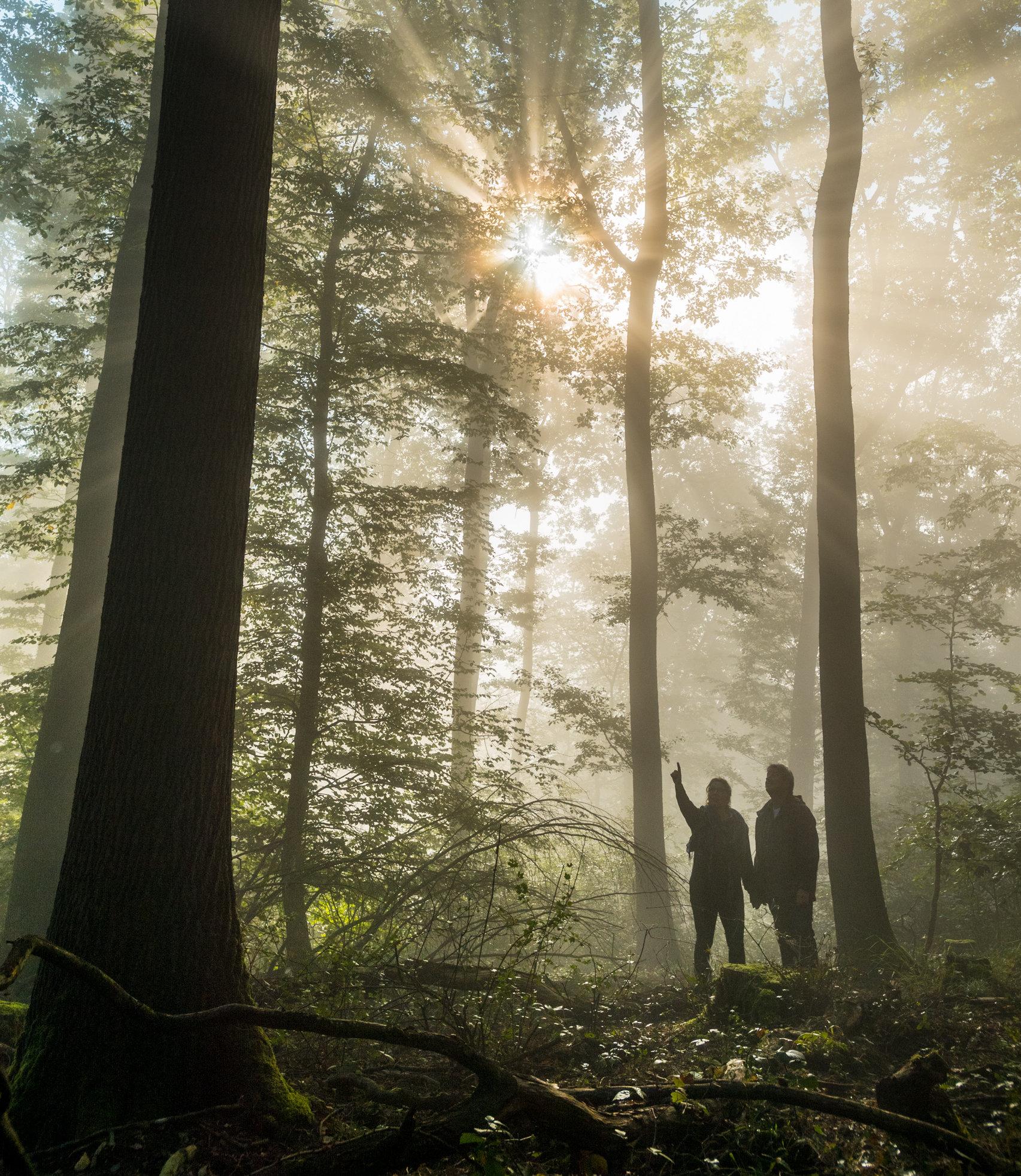 Gezellige wandeling in het bos bij Boppard, Romantische Rijn