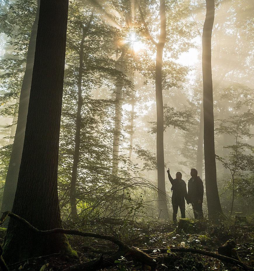 Waldspaziergang in Boppard, Romantischer Rhein