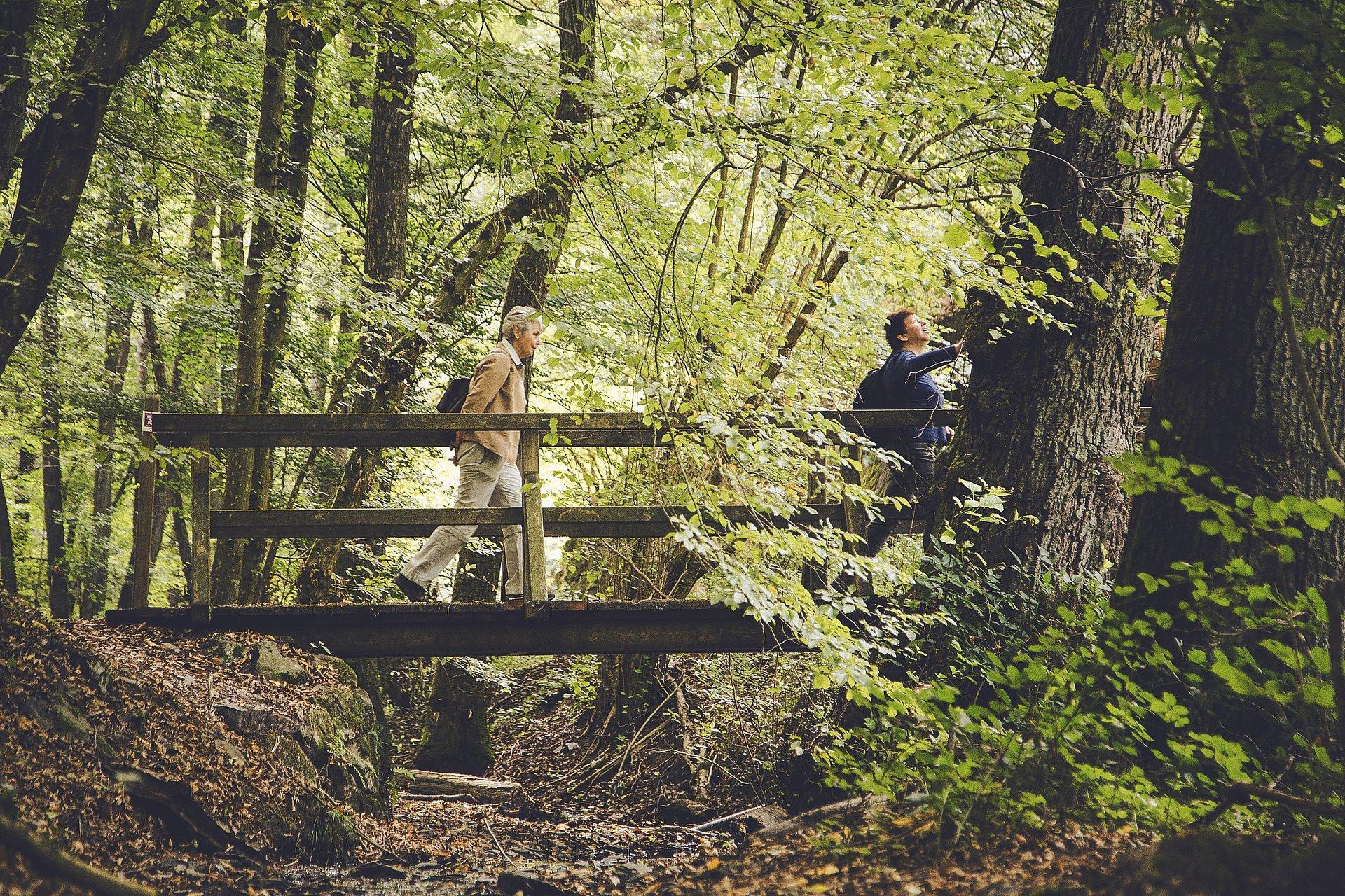 Boswandeling en bosbaden in Boppard, Romantische Rijn