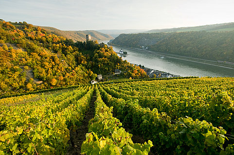 Weinberge mit Blick auf Burg Pfalzgrafenstein, Romantischer Rhein