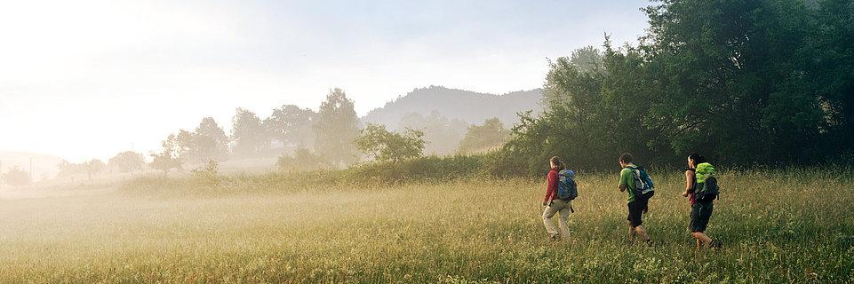 Wanderung auf dem Pfälzer Waldpfad bei Schindhard, Pfalz