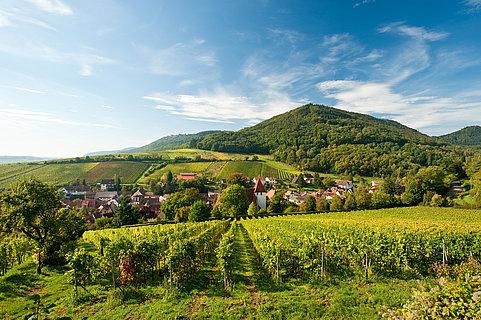 Vue sur le paysage viticole près de Leinsweiler, Palatinat