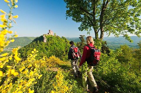 Wanderung auf dem Pfälzer Weinsteig mit Blick auf Burg Trifels, Pfalz