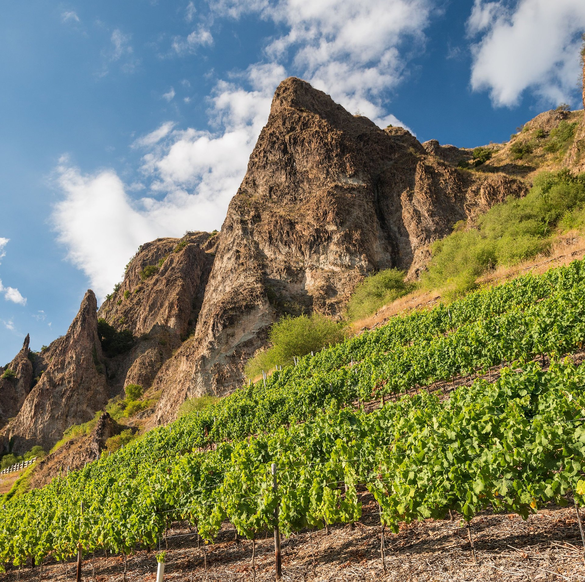 Vineyards at the Rotenfels cliff near Bad Münster am Stein-Ebernburg, Nahe valley