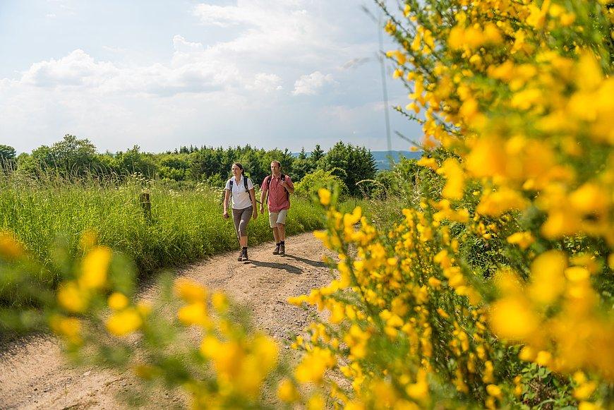 Wanderung bei Kurtscheid auf der WällerTour Klosterweg, Westerwald