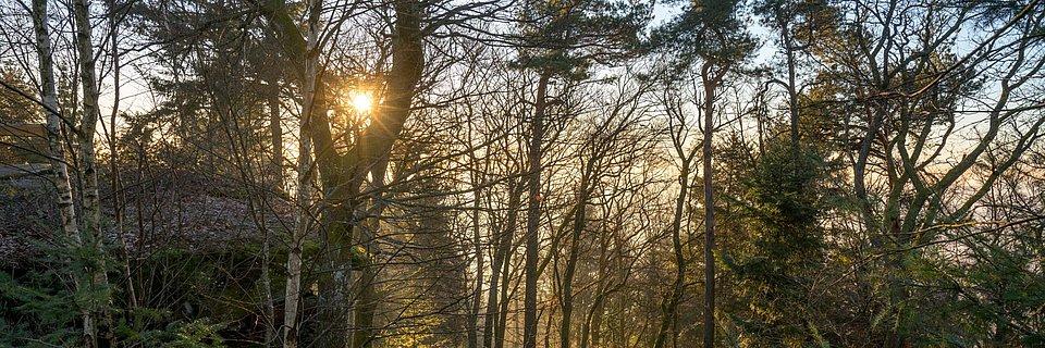 Blick in den dichten Wald, Pfalz