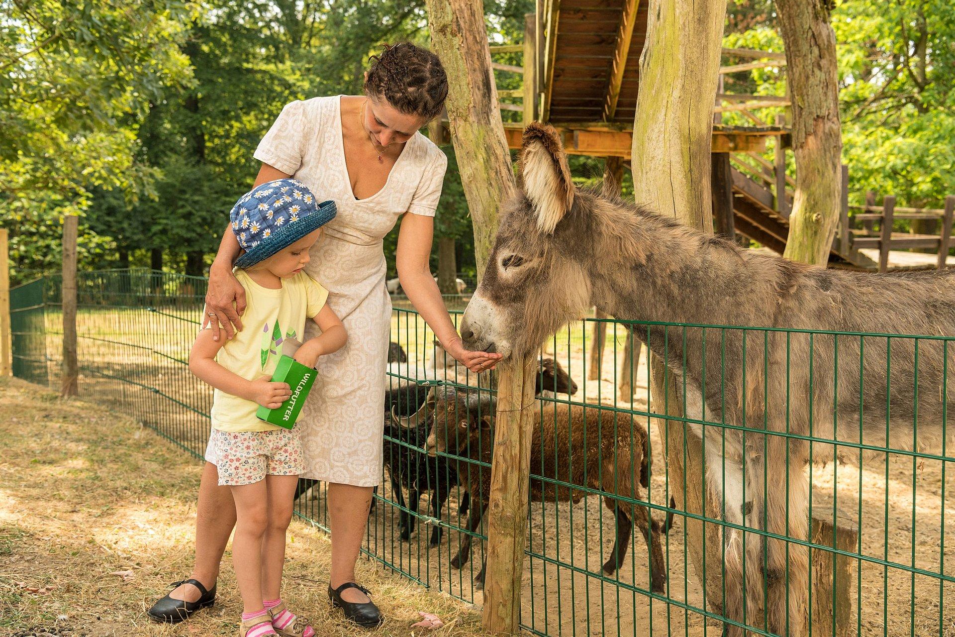 Esel füttern im Wild- und Erlebnispark Daun, Eifel