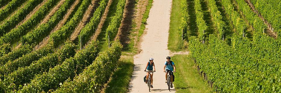 Fietsroutes in Rijn-Hessen