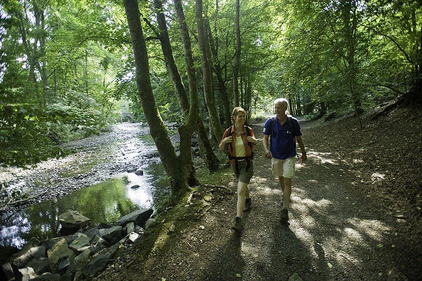 Wanderung auf dem WesterwaldSteig im Nistertal, Westerwald