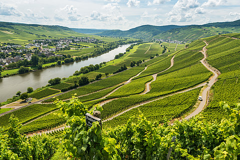View of the vinyards of the Moselle, Moselle