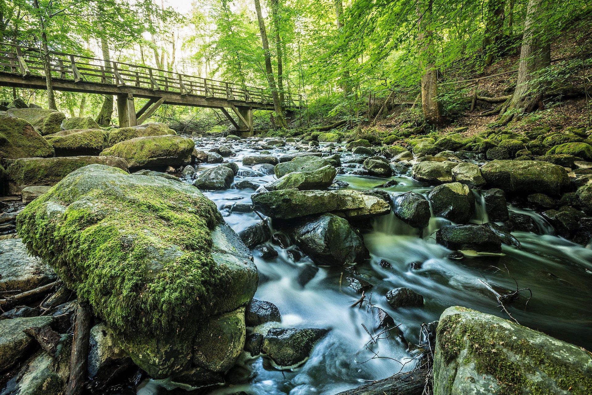 Naturschutzgebiet Holzbachschlucht bei Seck, Westerwald