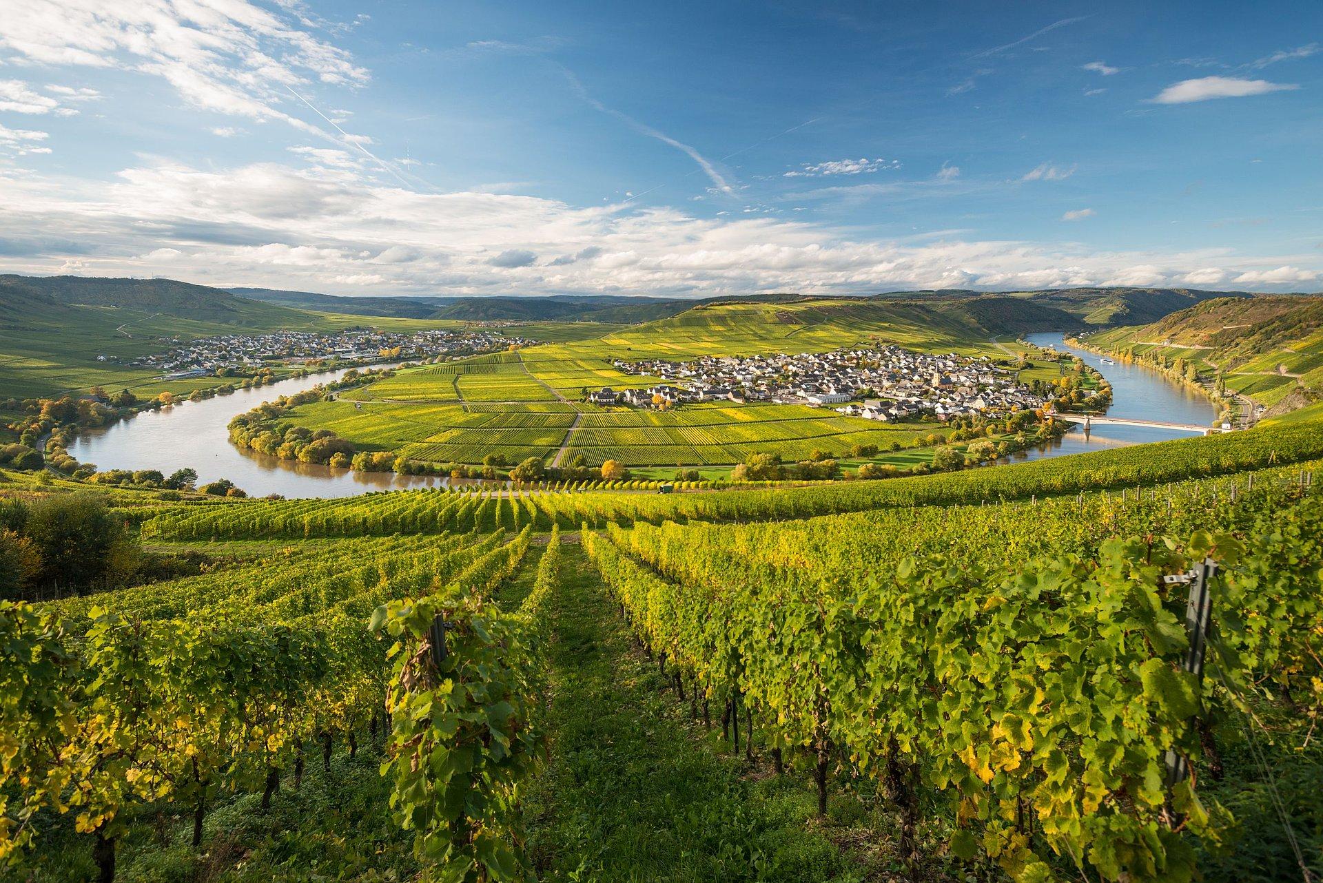 Boucle de la Moselle à Leiwen, vallée de la Moselle
