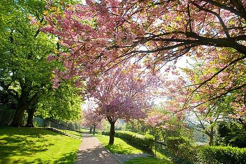 Spring Awakening on the Rheinsteig in Rengsdorf, Westerwald
