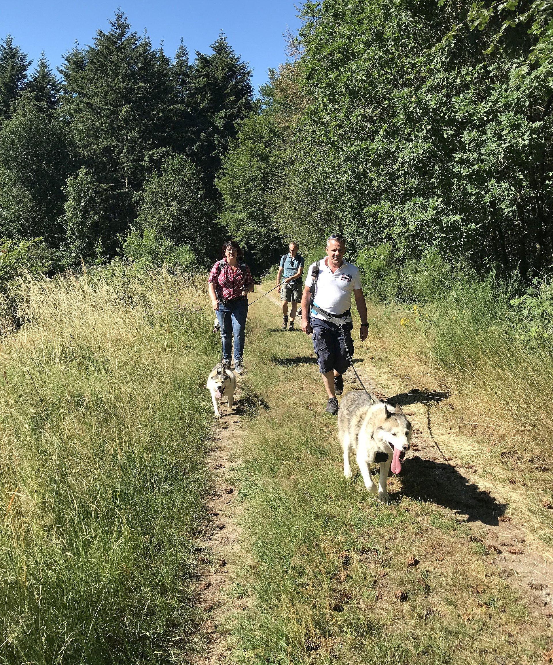Huskytour beim Tier-Erlebnispark Bell, Hunsrück