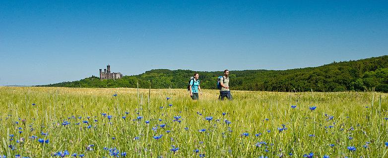Randonnée le long du circuit Lahnwanderweg près de Balduinstein, vallée de la Lahn