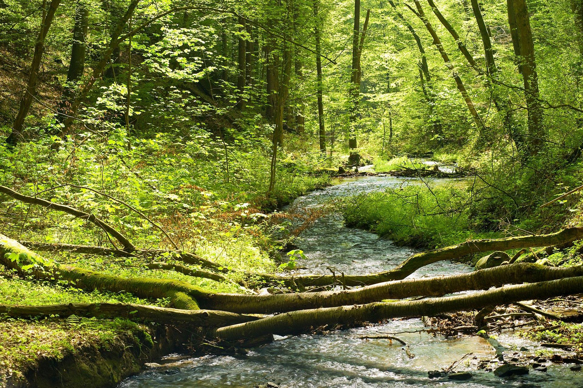 Beekwandeling in het dal van de Völkerwiesenbach bij Rengsdorf, Westerwald