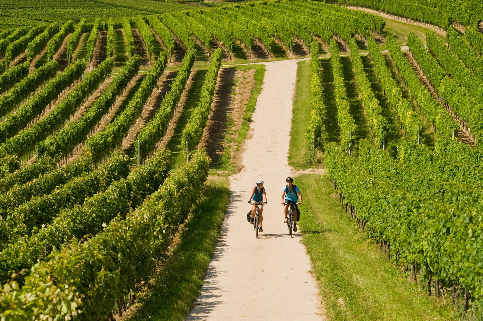 Fietsen door de wijnlandschap, Rijn-Hessen