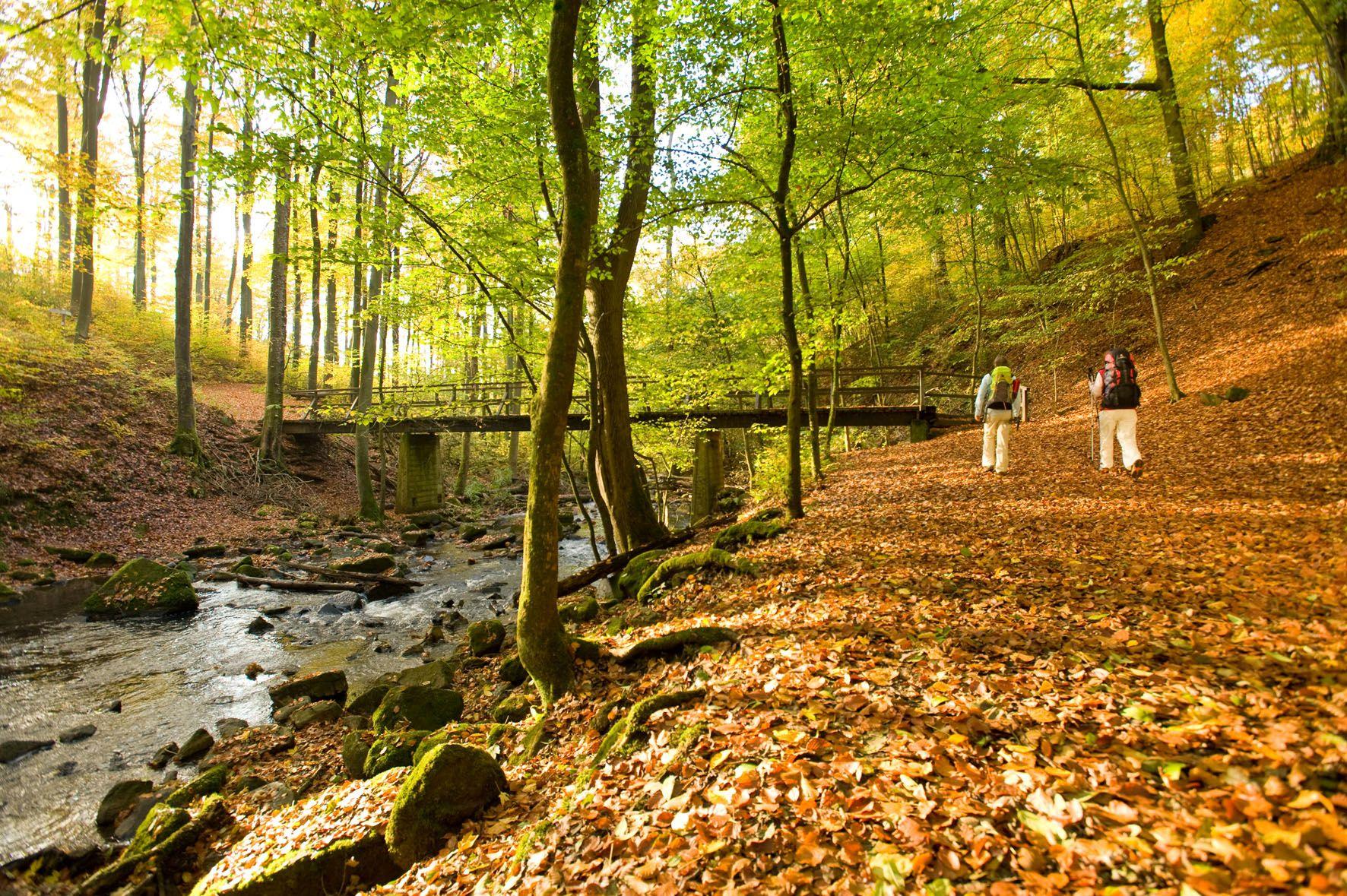 Wandelen door de Holzbachkloof op de WesterwaldSteig bij Seck, Westerwald