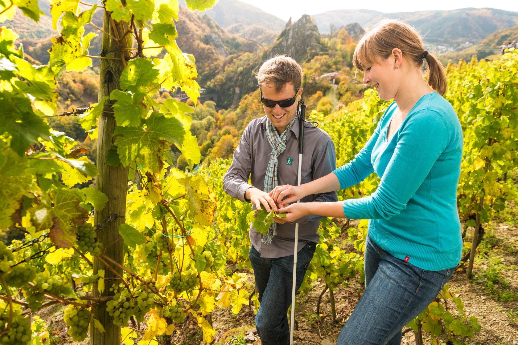 Couple se promenant au milieu des vignes près d'Altenahr, vallée de l'Ahr