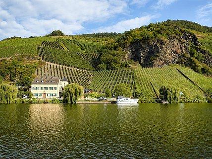 Blick auf das Weingut Geierslay