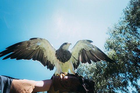 Raubvogel in der Greifvogelstation Hellenthal