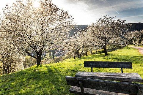 Frühling am Dernbacher Haus