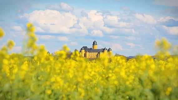 Rapsfeld vor dem Schloss