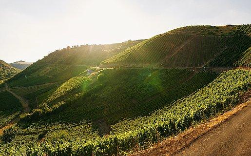 Schönste Weinsicht 2020, Niederhausen