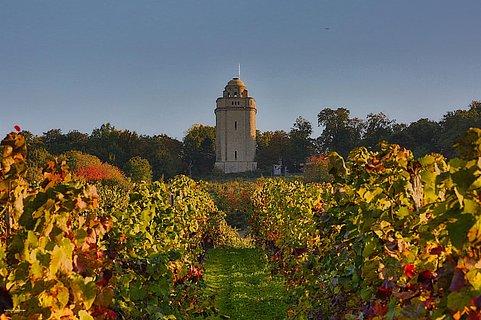 Bismarckturm mit Blick von den Weinbergen