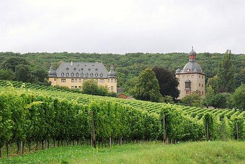 Schloss Vollrads Weinberg